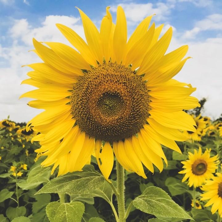 Jangan Sampai Salah Beri Berikut 8 Jenis Bunga Yang Cocok Untuk Hadiah Beserta Artinya